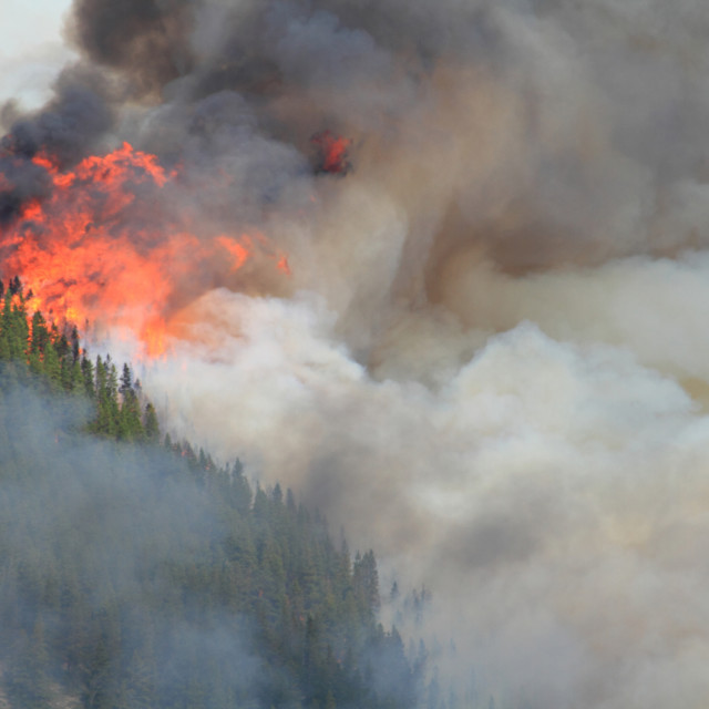"""Forest Fire in the Rocky Mountains 10"" stock image"