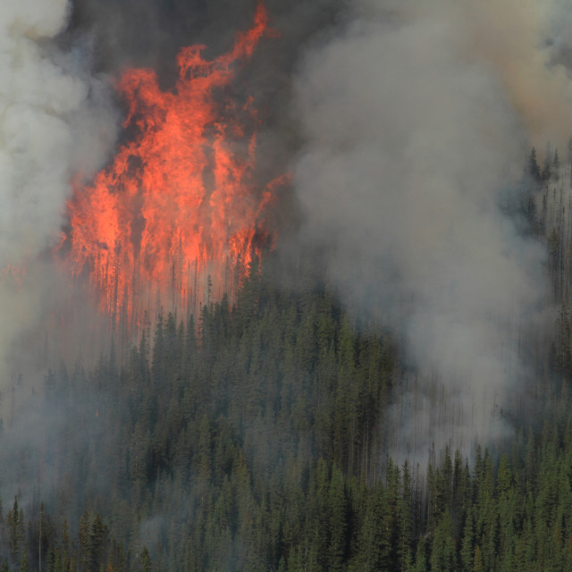 """Forest Fire in the Rocky Mountains 03"" stock image"