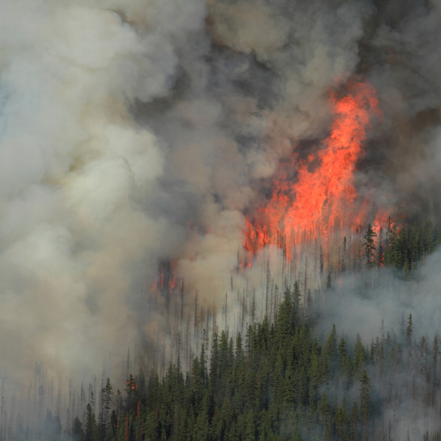 """Forest Fire in the Rocky Mountains 07"" stock image"