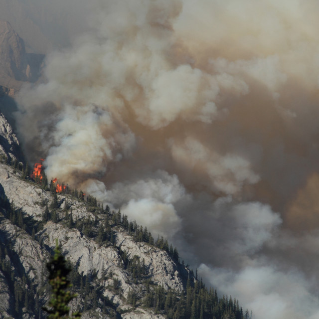 """Forest Fire in the Rocky Mountains 02"" stock image"