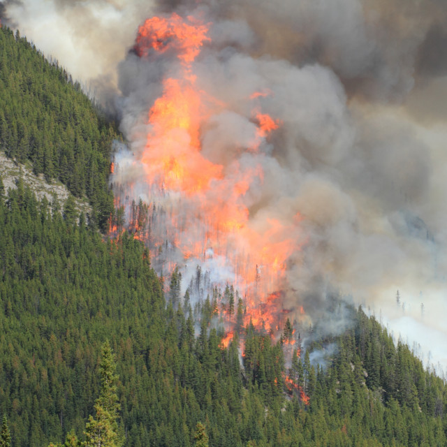 """Forest Fire in the Rocky Mountains 09"" stock image"