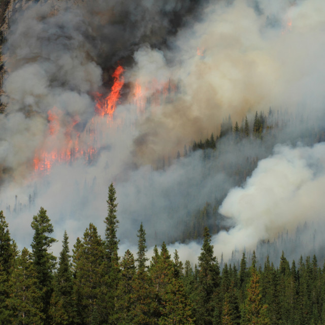 """Forest Fire in the Rocky Mountains 15"" stock image"