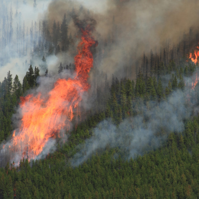 """Forest Fire in the Rocky Mountains 12"" stock image"