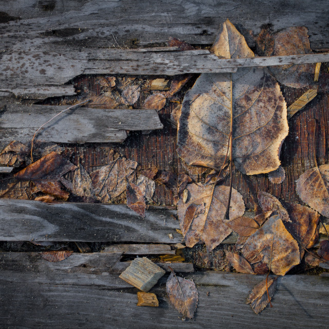 """Grungy autumn leaves on old plywood"" stock image"