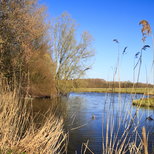 """Biesbosch national park"" stock image"