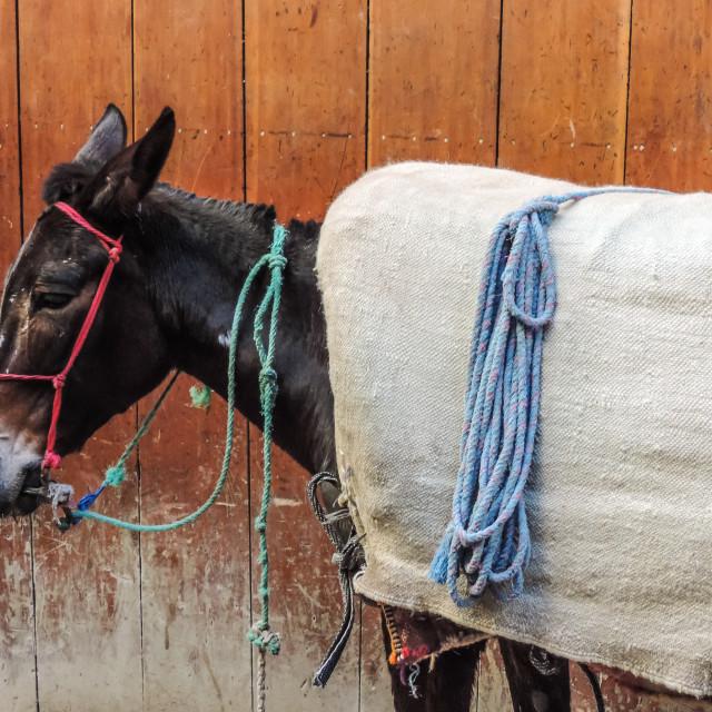 """""""Medina Donkey"""" stock image"""