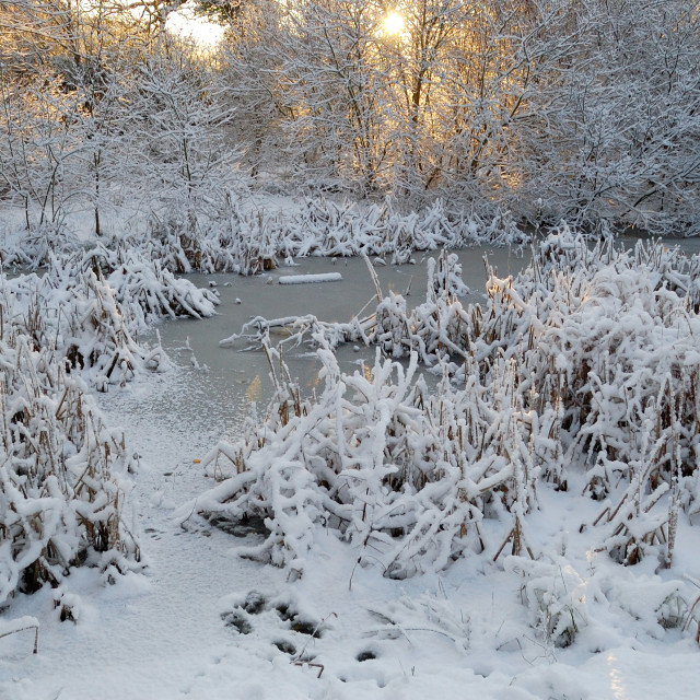 """Frozen sunlight"" stock image"