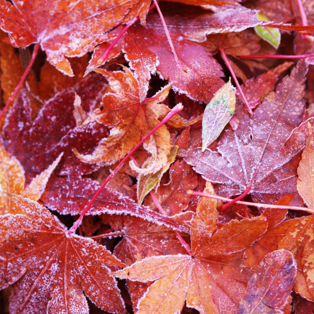 """""""First frost of the year"""" stock image"""