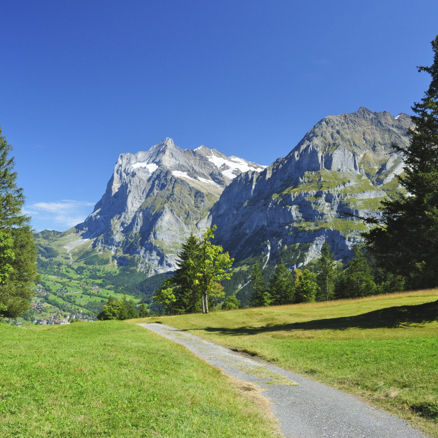 """Trail towards the Wetterhorn"" stock image"