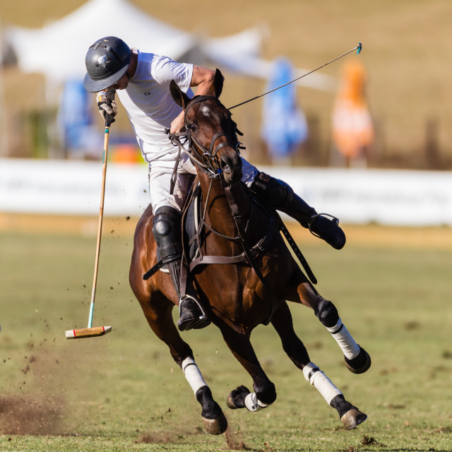 """Equestrian Polo Rider Horse Action"" stock image"