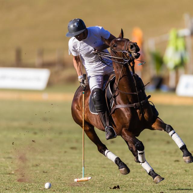 """Equestrian Polo Rider Horse Action"" stock image"