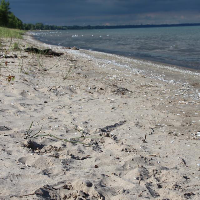 """""""Stormy beach scene"""" stock image"""
