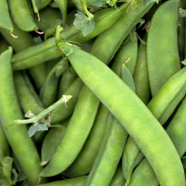 """""""Peas in the pod"""" stock image"""