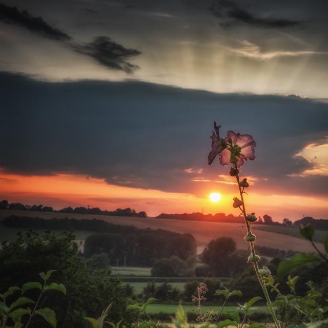 """Poppy Sunset"" stock image"