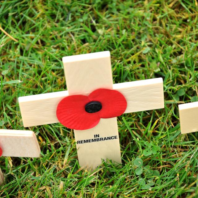 """""""Poppy Crosses"""" stock image"""