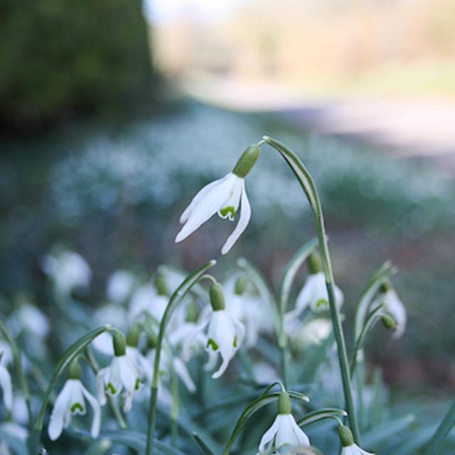 """""""Springtime"""" stock image"""