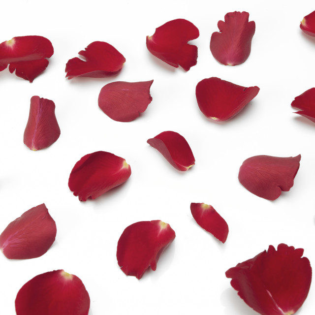 """Scattered red Rose petals"" stock image"