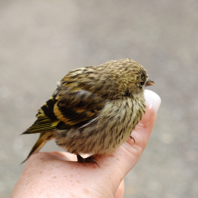 """A Bird In The Hand"" stock image"