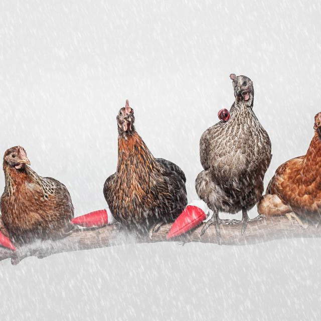 """""""Christmas chicks"""" stock image"""