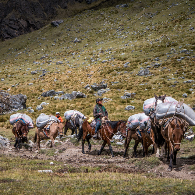 """""""Mountain Boy Leading the Pack"""" stock image"""