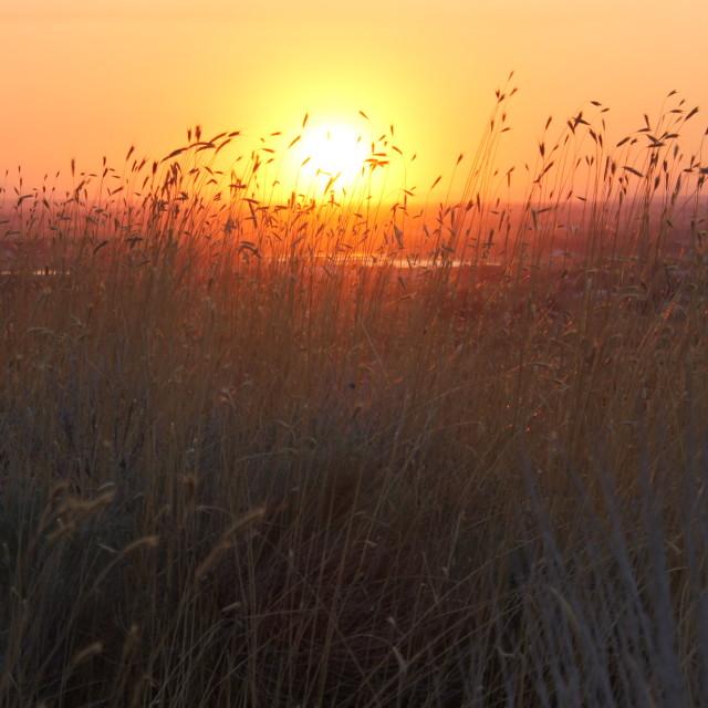 """Beautiful sunset in Idaho"" stock image"
