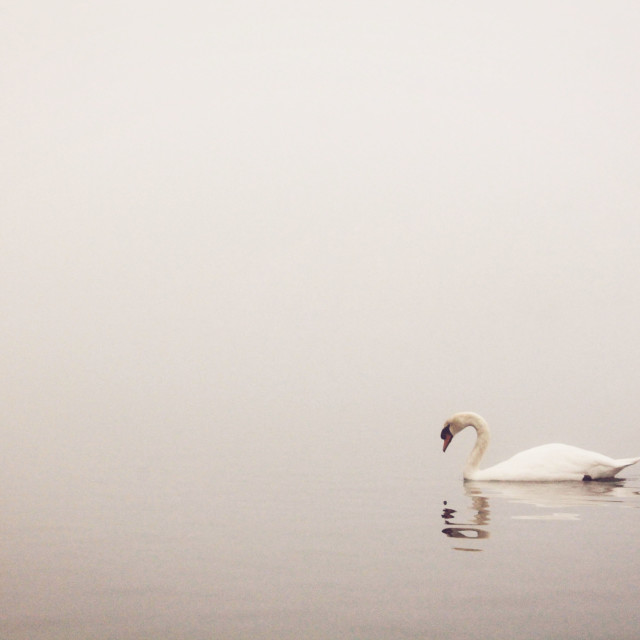 """""""Encroaching Mist I"""" stock image"""