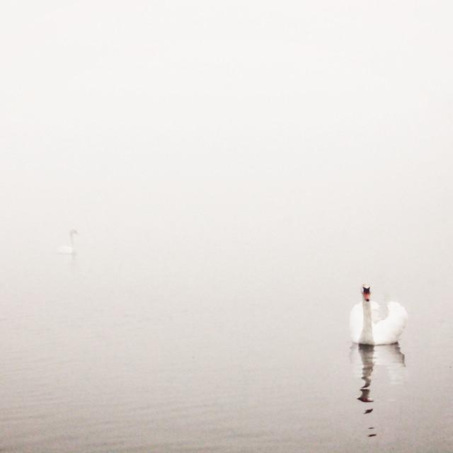"""""""Encroaching Mist II"""" stock image"""