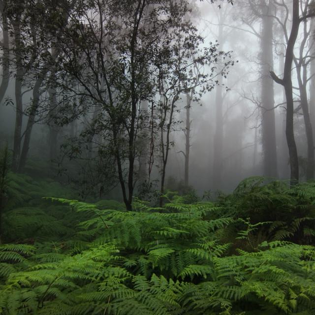 """""""Autumn Mist"""" stock image"""