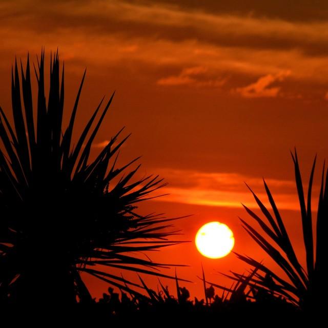 """Sunrise silhouette"" stock image"