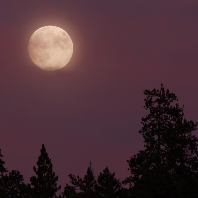 """Blue Moon. Full moon 08/19/13, Oregon, Cascade Siskiyou National"" stock image"