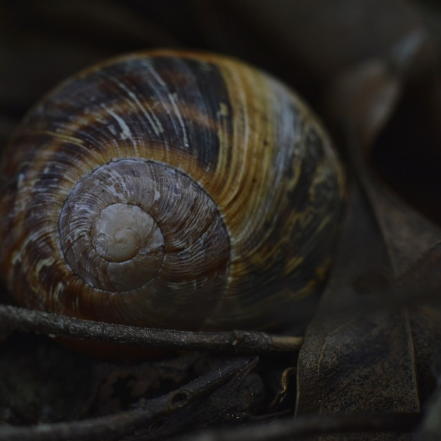 """Snail Shell"" stock image"