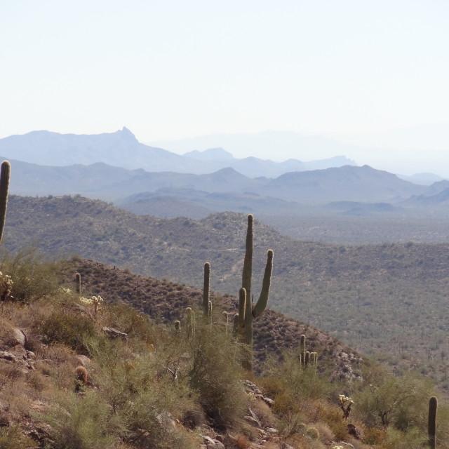 """""""Arizona Desert"""" stock image"""