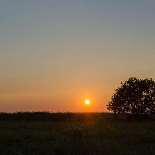 """Lone tree at sunset"" stock image"