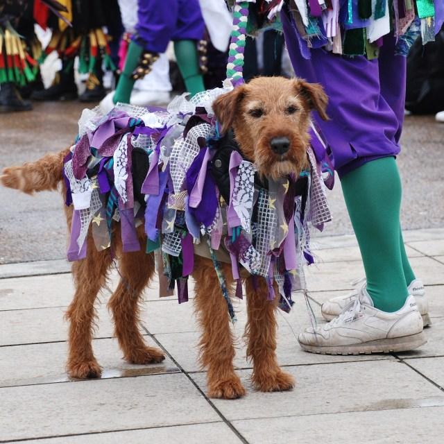 """""""Morris dancers dog, Hastings"""" stock image"""