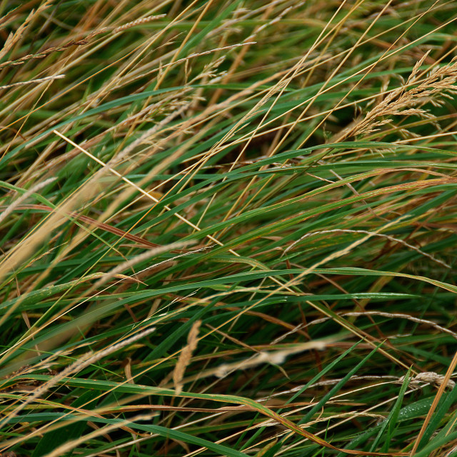 """Grass Texture"" stock image"