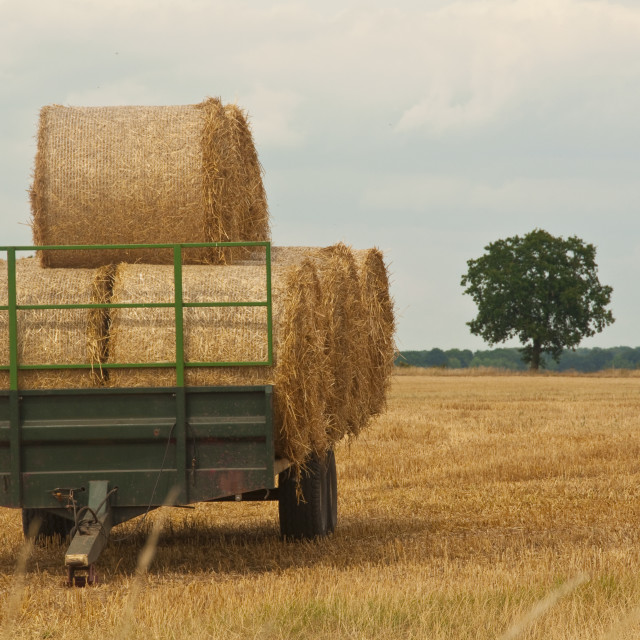 """Trailer load of straw"" stock image"