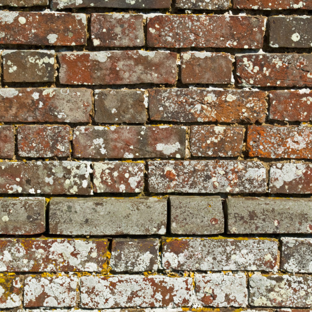 """Old Brick Wall"" stock image"