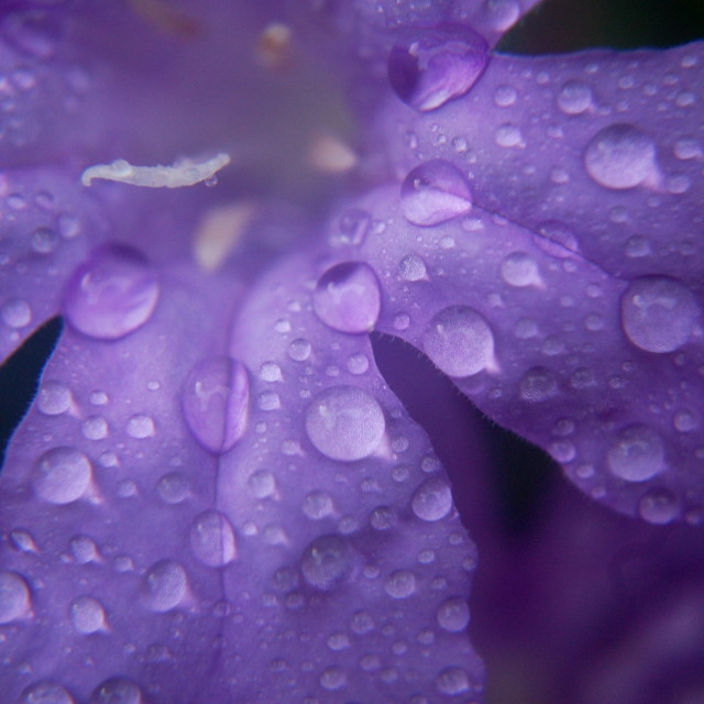 """Purple Rain"" stock image"