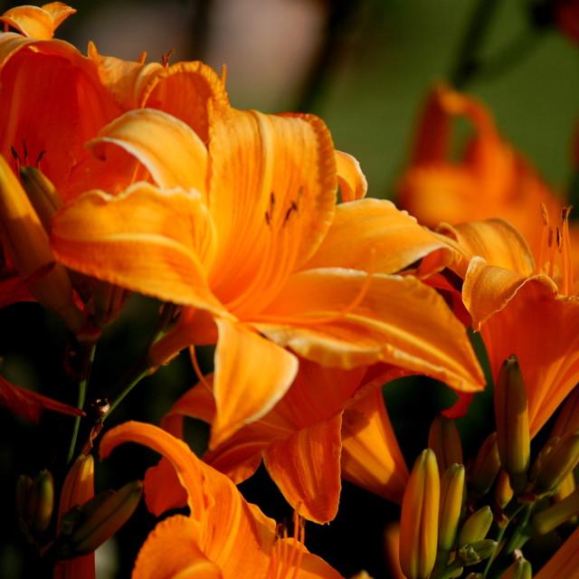 """""""I like orange"""" stock image"""