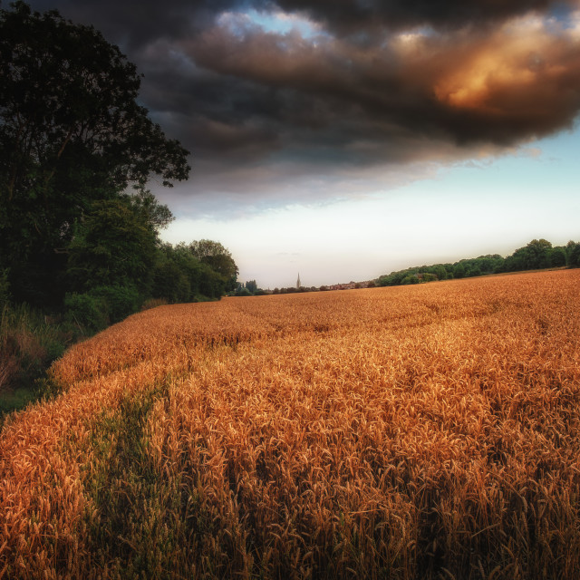 """""""Cathedral In The Wheat Field"""" stock image"""
