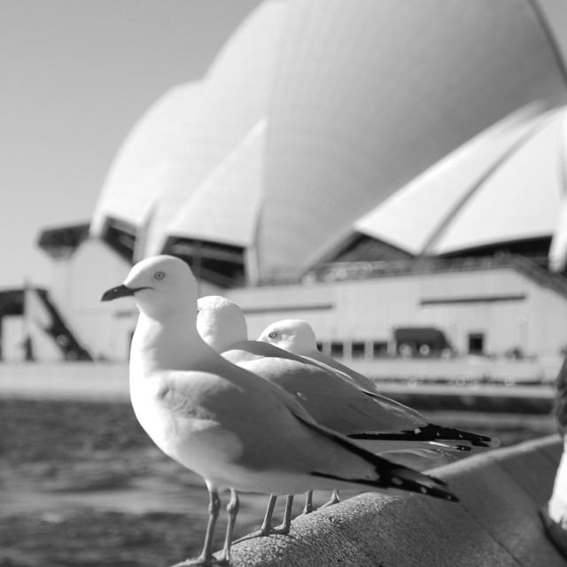 """Thinking seagull"" stock image"