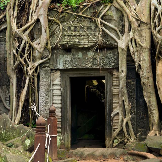 """""""Ta Prohm Temple in Cambodia"""" stock image"""