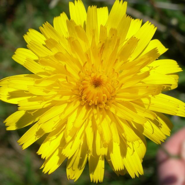 """Sunshine Flower"" stock image"