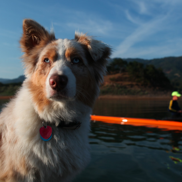 """""""Lucy sits on the bow of the launch as Brian rows his boat on thi"""" stock image"""