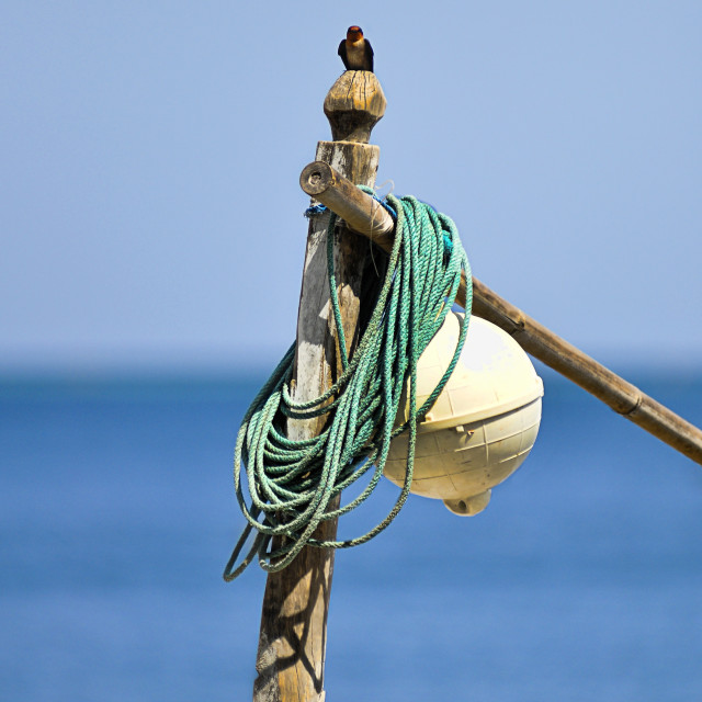 """Bird on a buoy."" stock image"