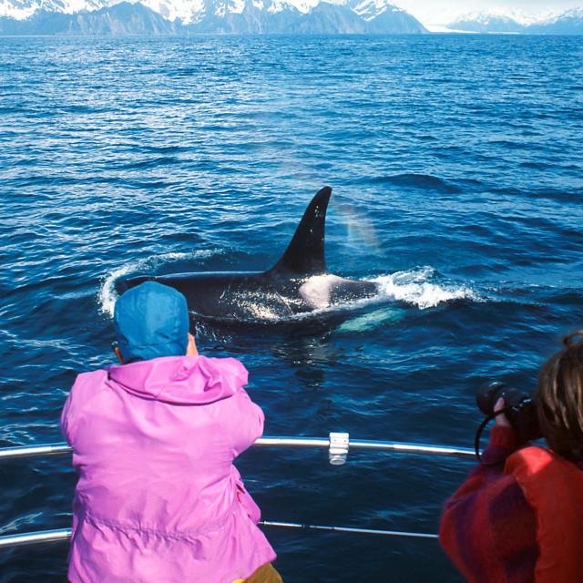 """Tourists take pictures of a passing orca whale, Alaska, Kenai Fj"" stock image"
