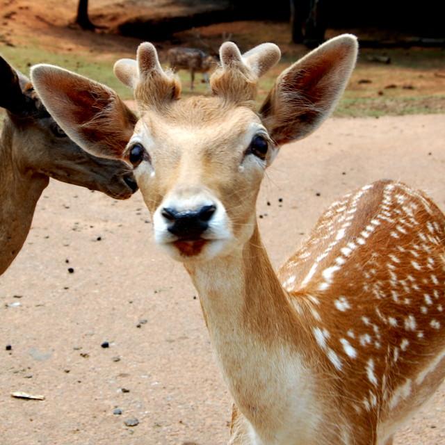 """""""Hello Deer"""" stock image"""