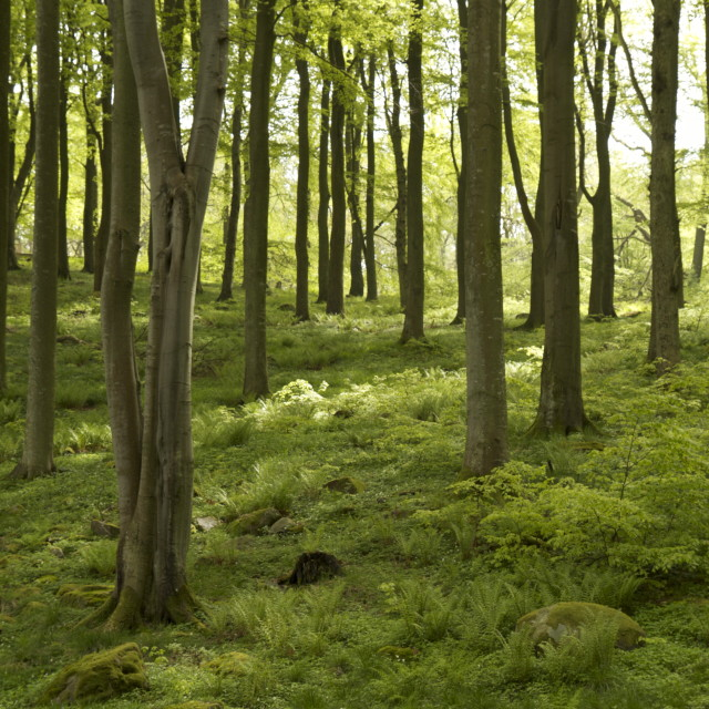 """green lush forest"" stock image"