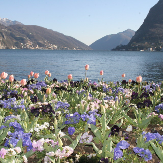 """""""Tulip Lake 2"""" stock image"""