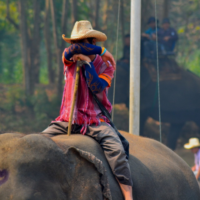 """Thai elephant driver"" stock image"